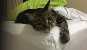 CAA Adoption Day @ Pet Stock